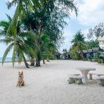 Шритану пальмы и деревья