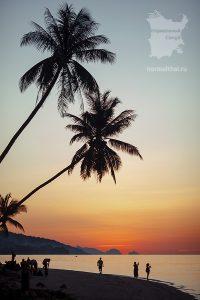 Пальмы Бан-Тай